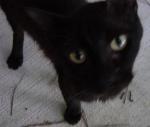 kittyface.jpg